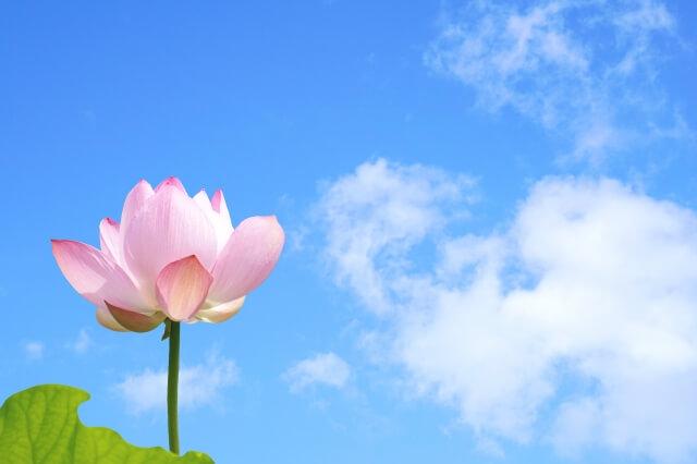 花 サブスク デメリット