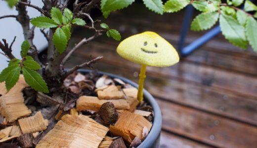 観葉植物 きのこ 対処法