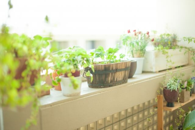 観葉植物 カビ 土